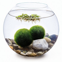 Set - kulaté akvárium 15,5 cm, 2 řasokoule, dekorace